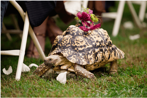 Four Legged Ring Bearer