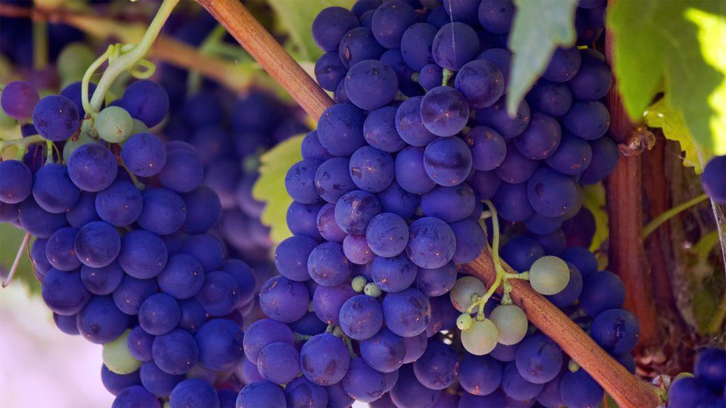 Limousine Wine Tours