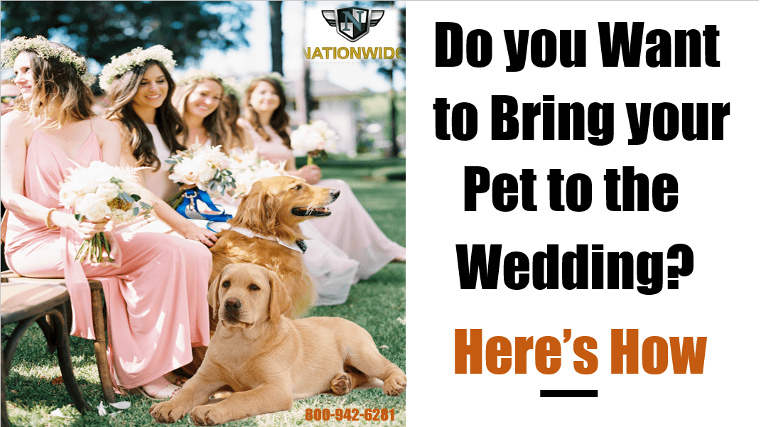 Do you Want to Bring your Pet to the Wedding? — Here's How
