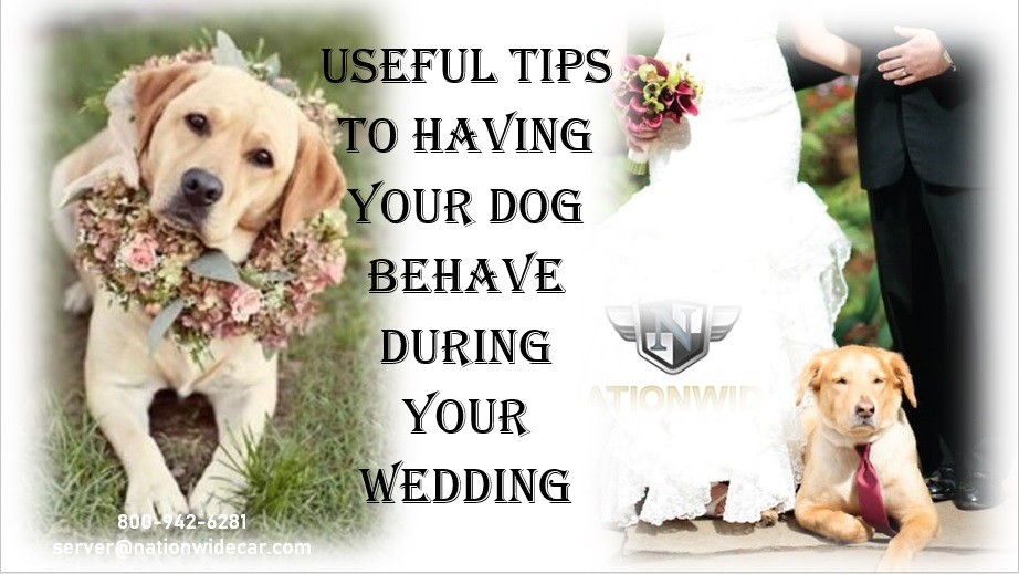 Great Ways to Incorporate Your Pet into Your Wedding