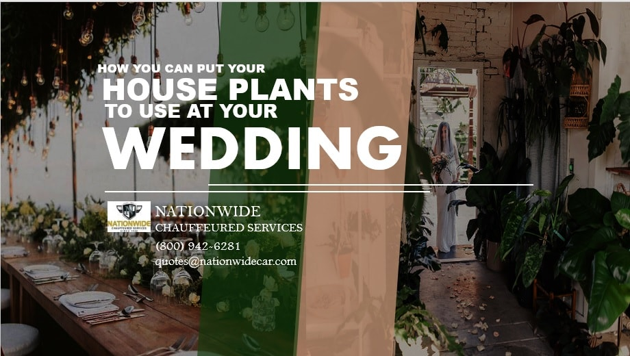 How You Can Put Your House Plants to Use at Your Wedding